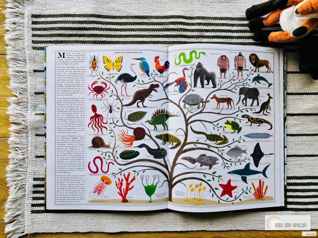 Ein Blick in das Sachbuch Bäume für Kinder