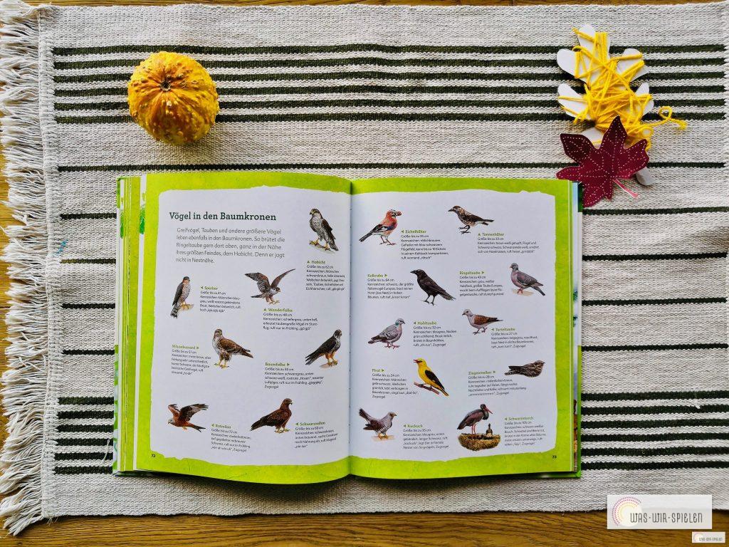 Ein Blick ins Buch