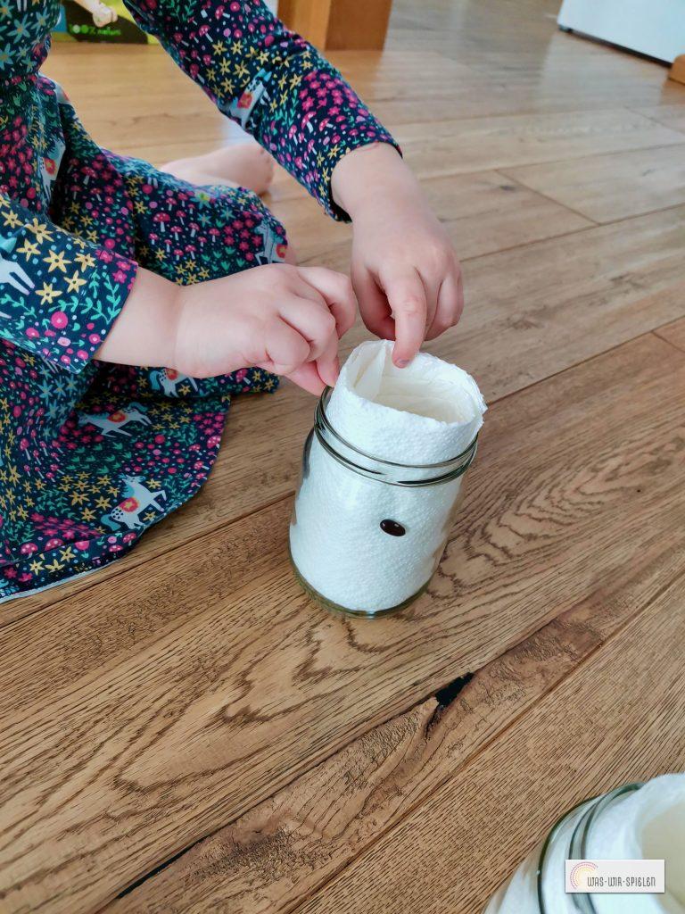 Mit Küchenpapier werden die Bohnen befestigt
