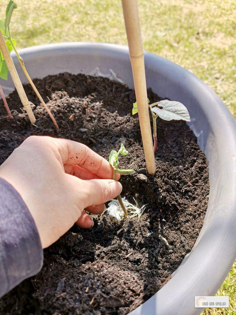 Vorsichtig umpflanzen